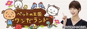篠田麻里子 ABC朝日放送 新番組「ペットの王国 ワンだランド」
